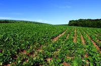 A soybean farm in Brazil.