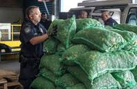US CBP agent inspecting peppers at Red Hook Terminal, New York.