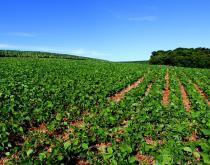 A soybean farm in Brazil.