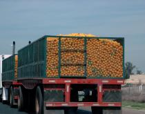 Truck transporting oranges in California, United States.