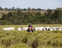 Brazilian beef exporters recalibrate expectations